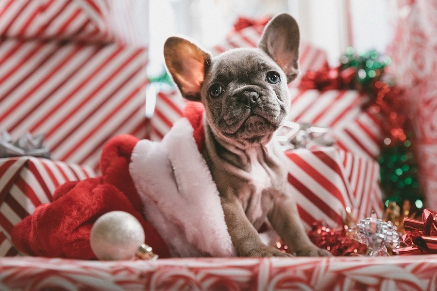 Super cute dog sitting in Christmas hat - for the best ideas to make your home smell like Christmas